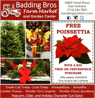 Fresh Cut Trees - Live Trees - Poinsettias