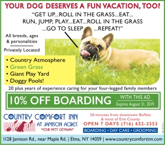 Your Dog Deserves A Fun Vacation, Too?