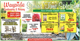 Spring Time Specials