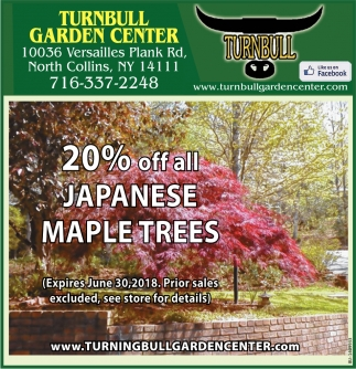 20% Off All Japanese Maple Trees